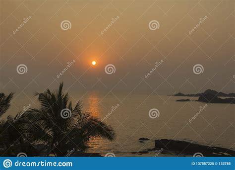 silhouette  palm tree  sunset stock photo