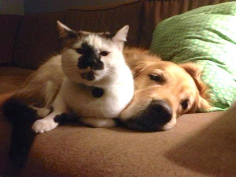 cat and dog in same house 8 cats and dogs that prove you don t need to be the same species to be best friends