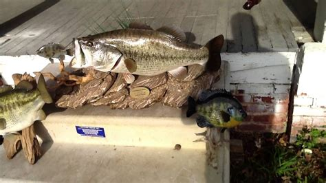 Resume Suspended Vi by Awesome Fish Mount 16lb Largemouth 10lb Largemouth 1 5lb
