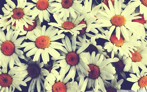 photo collection vintage flowers wallpapers