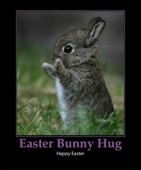 Funny Easter Bunny Memes - easter bunny hug pictures photos and images for facebook