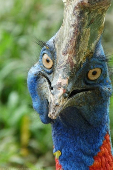 one very cool looking bird bird animals general