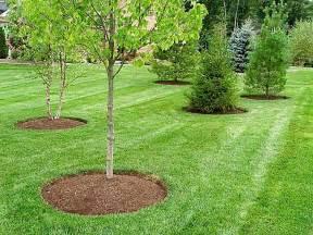 landscaping maintenance powered lawn service in colonial heights va find