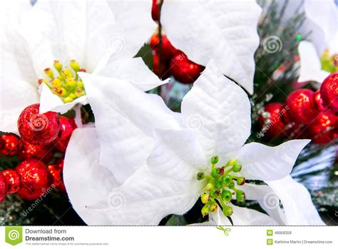 christmas decorations white poinsettia stock photo