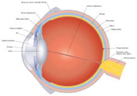 emorragia interna occhio anatomia dell occhio fotografia stock immagine 19117302