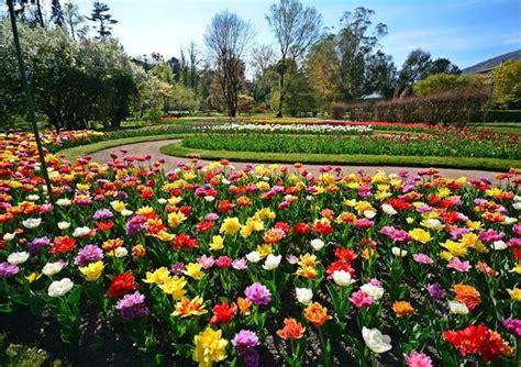 giardini di villa taranto una gita fuori porta al giardino di tulipani di villa taranto