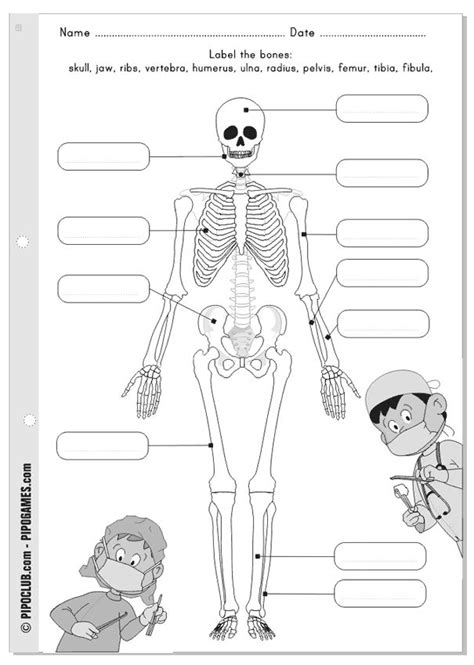 Bones Worksheet
