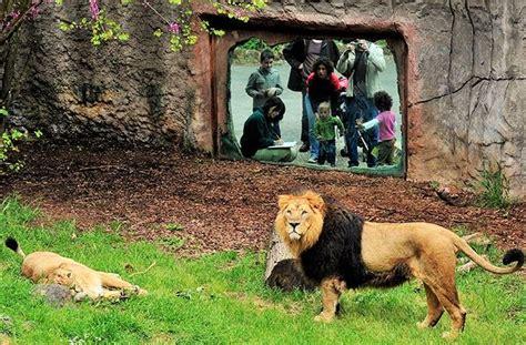 roma giardino zoologico bioparco di roma giardino zoologico scoprendoroma