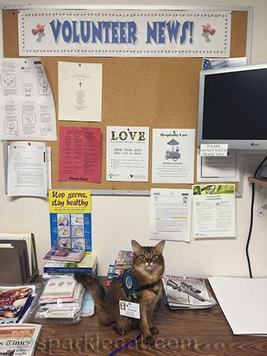 volunteer for free room and board my therapy cat visit the volunteer room sparklecat