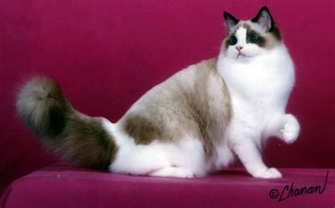 Sho Kucing kucing novii s cat shop