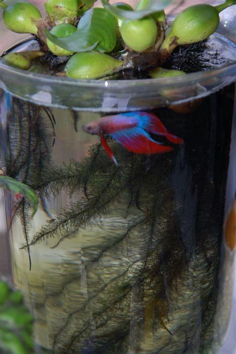 flora  fauna container water gardens indoor water