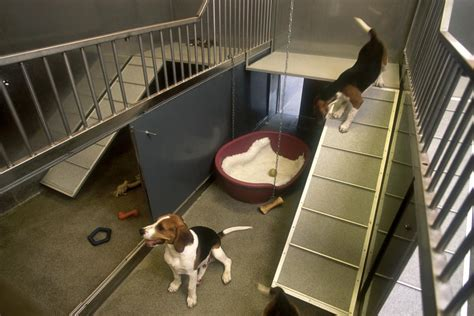housing for dogs housing and husbandry of dogs nc3rs