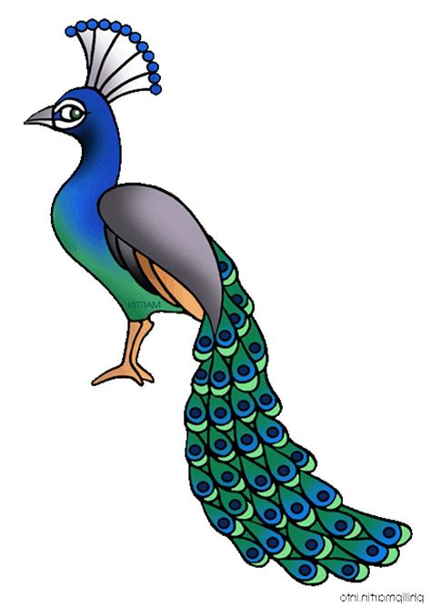 clipart to for free peacock clipart free clipart images image 39632