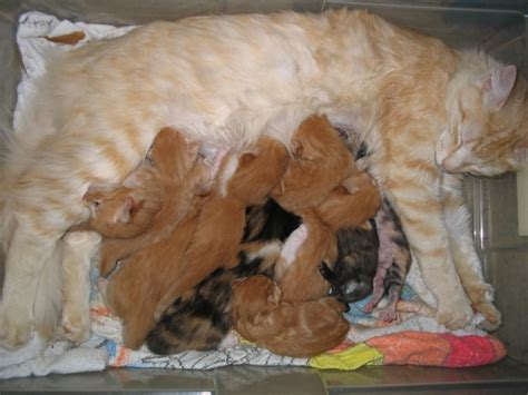 healthy fats for nursing news of the duh cats eat more when nursing kittens