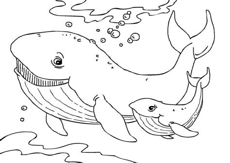 big shark coloring page coloriage baleines img 27231
