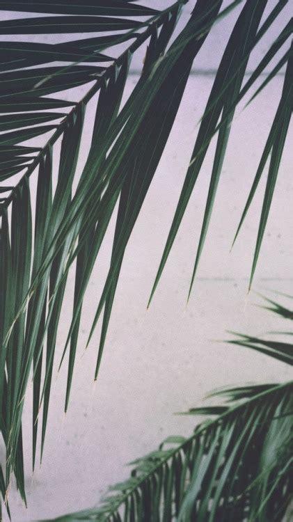 banana palm wallpaper tumblr palm leaf wallpaper tumblr