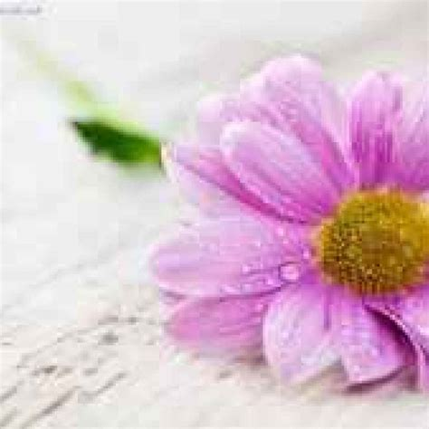 immagini fiori per desktop sfondi per desktop fiori ris 1366x768 1366x768
