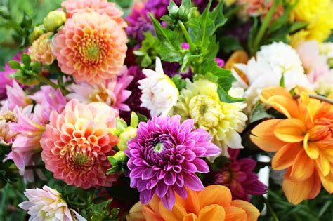 flowers by post beautiful fresh flowers flowers wallpapers