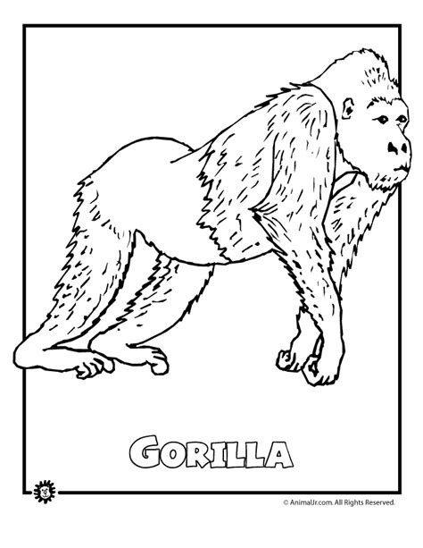 coloring pages for jungle animals rainforest animal coloring pages az coloring pages