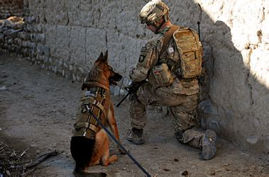 What Calendar Do They Use In Afghanistan Dogs Use Superior Senses To Keep Troops Safe On Patrol