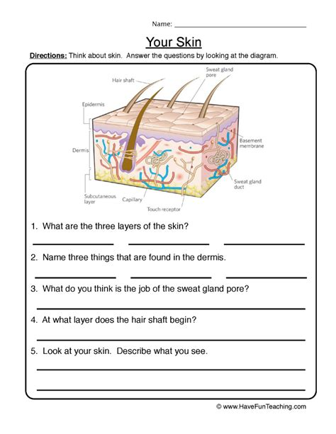 Integumentary System Worksheet Answers by Skin Worksheet 1 Authorstream