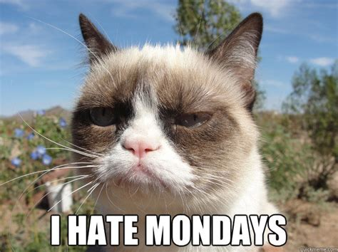 Grumpy Cat Monday Meme - grumpy cat monday memes