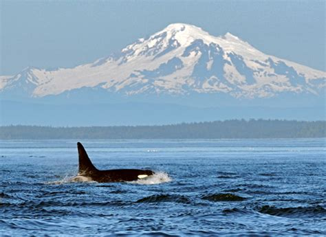 whale watching and wildlife tours • eagle wing tours