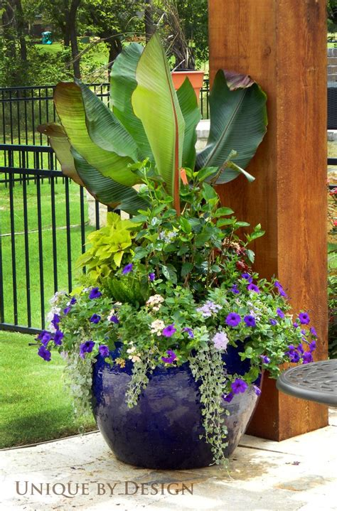 Flower Pot Ideas Planting Www Imgkid Com The Image Kid Large Container Gardening Ideas