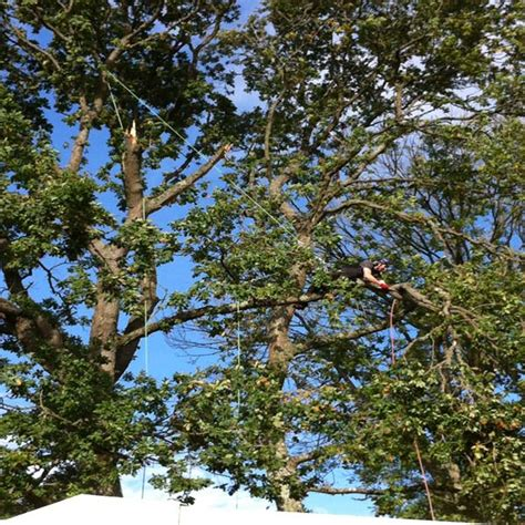 plymouth tree services plymouth tree consultancy dartforest treeworks