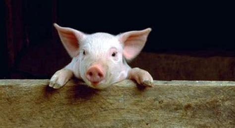imagenes de animales utiles los animales de la granja por 174 anipedia net