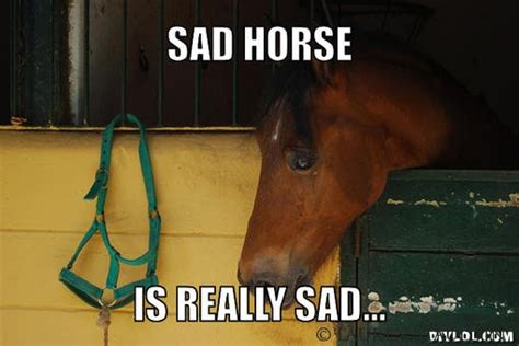 Sad Meme Generator - 30 best horse memes you would ever see in your life 99