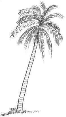 doodle drawings images palm tree drawings