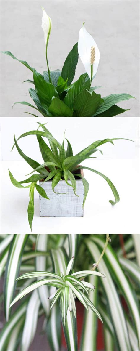 easy plants to grow indoors easy to grow indoor plants affordable best easy to grow