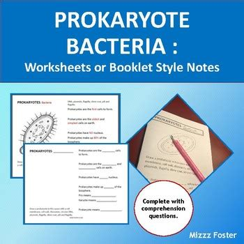 Prokaryotes Bacteria Worksheet Answers
