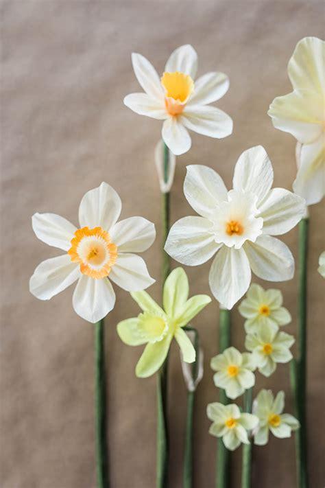 Paper Daffodils - paper daffodil tutorial design sponge