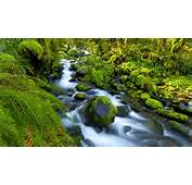 Download Beautiful Water Flow In Forest HD Wallpaper Search More