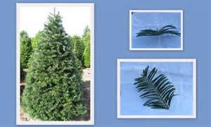 Noble fir vs douglas fir christmas tree types doug noble amp grand