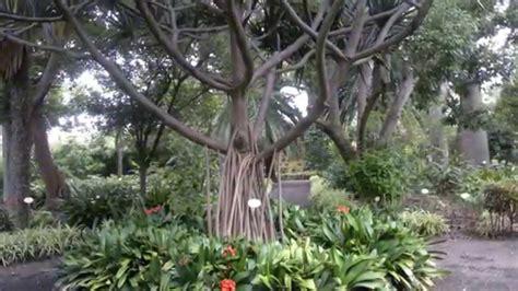 Botanical Gardens Tenerife Tenerife 2011 De La Botanical Gardens