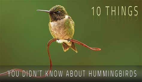 hummingbird facts fun facts and useful information most