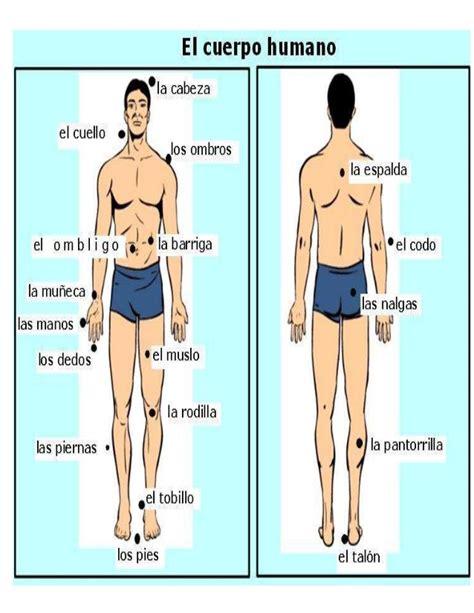 el cuerpo humano 848016977x cuerpo humano
