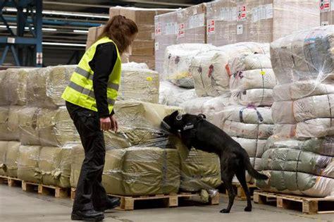 191 c 243 mo entrenan a los perros detectores de droga