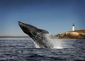 coos bay oregon whale watching oregon scenery pinterest