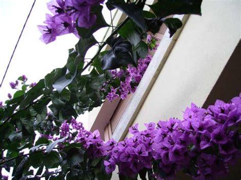 imagenes de rosas trepadoras imagenes de enredaderas de flores animadas imagui