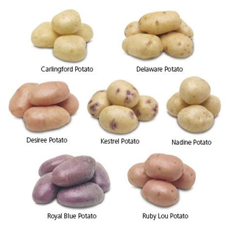 best type of potatoes for roasting potatoes on discover the best trending types