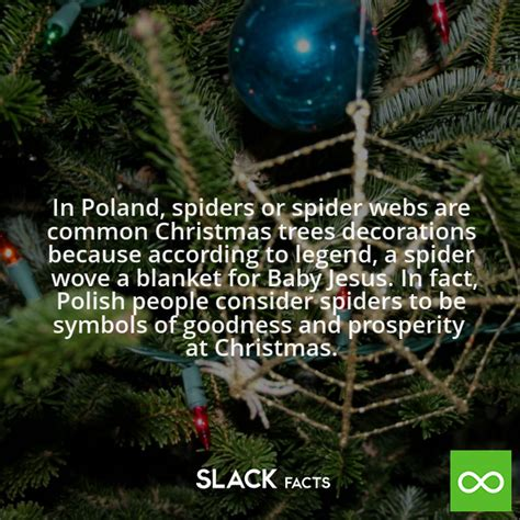 why are spider webs a popular christmas tree decoration slack facts did you in poland spiders or spider webs