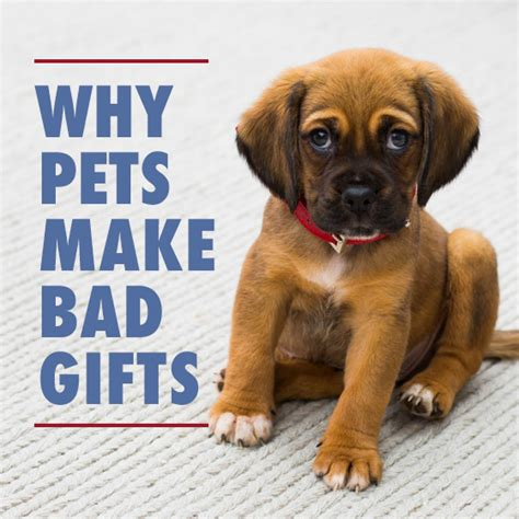 Why Accessories Make The Gift by Why Pets Make Bad Gifts Daily