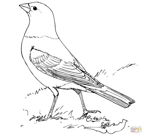 bird brown thrasher coloring page coloring pages