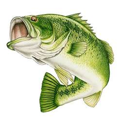 bass fishing home page wildlife by ken oliver at coroflot