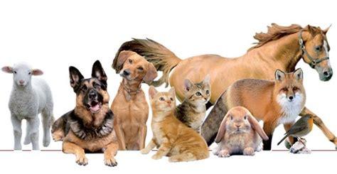 ufficio diritti animali news comune di marcallo con casone mi