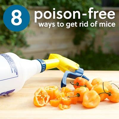 8 Ways To Get Rid Of Salesmen by 8 Poison Free Ways To Get Rid Of Mice Health